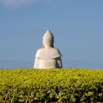 Budda in Yellow Bushes