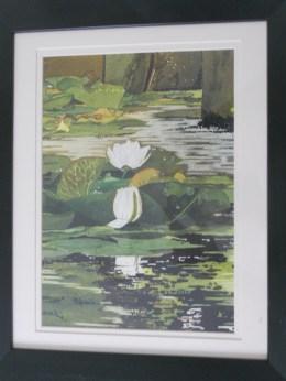 Bosherston Water lilies study.