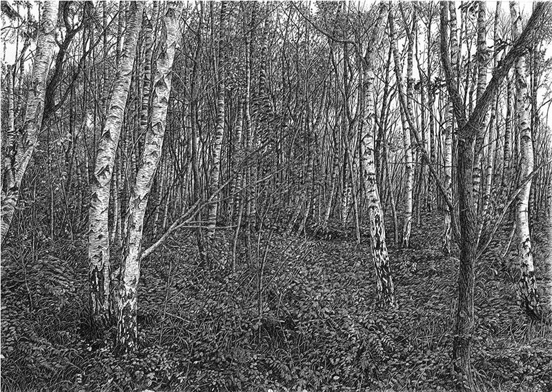 Sarah Woolfenden, Silver Birches