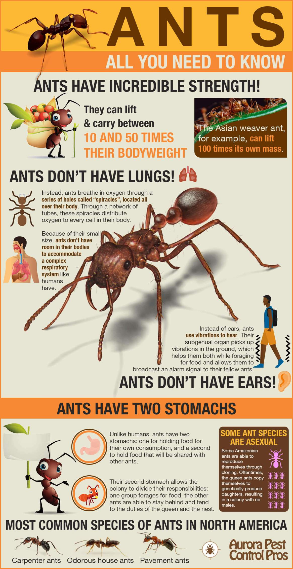 Ants – Everything You Need to Know