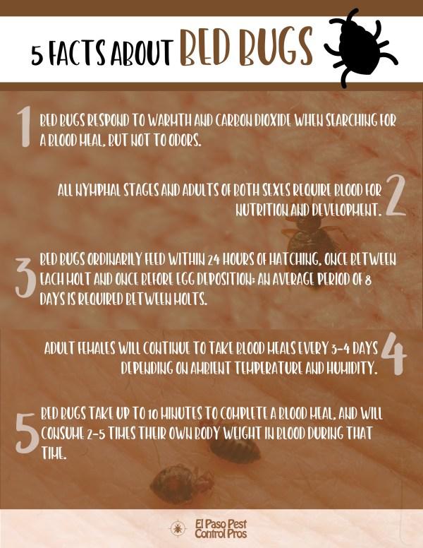 Bed-Bug-Facts-El-Paso-Pest-Control-Pros-1