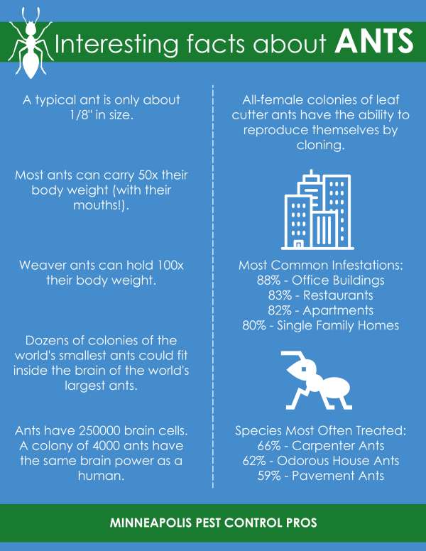 Interesting-Facts-About-Ants-Minneapolis-Pest-Control-Pros