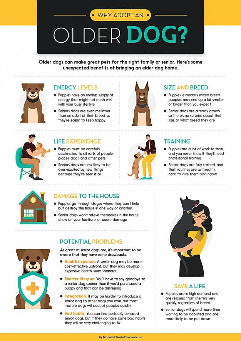 Why Adopt an Older Dog?