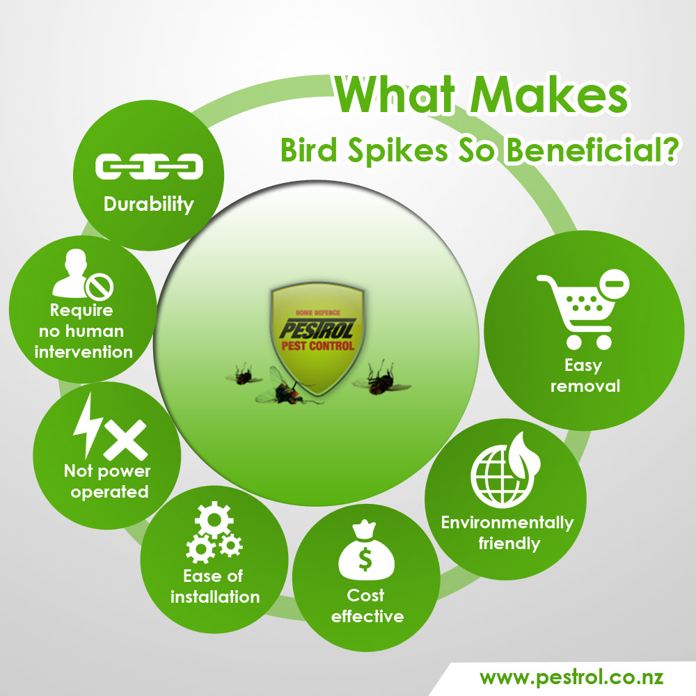 Bird Control In Your Home