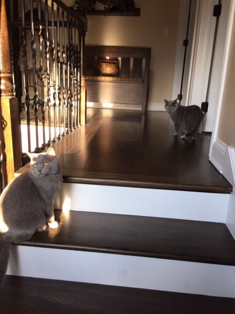 feline art inspectors
