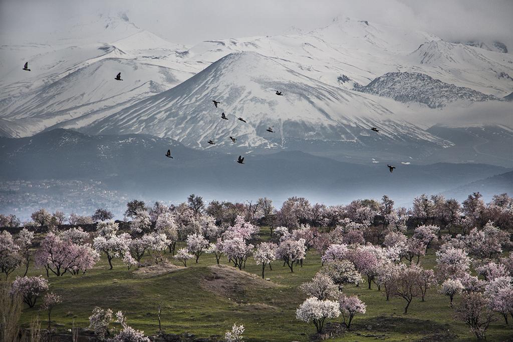Hülya Karakaş