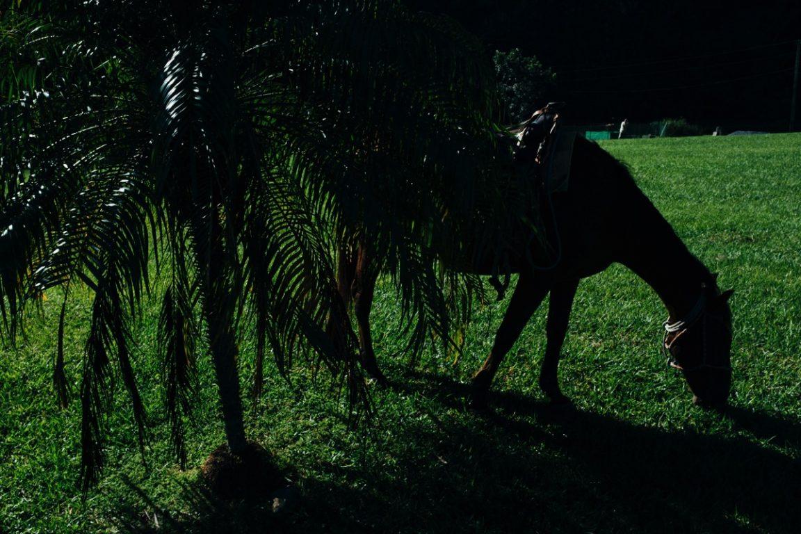 evrim duvarında bir at