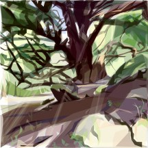 Jill Ray124 Chatsworth Trees, Yew low res