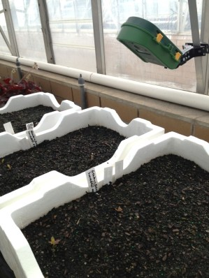 PlantCam set up to record a time-lapse video of the germinating seedlings