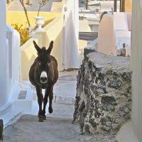 Donkey Tales from Santorini