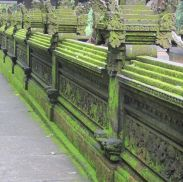 Green Wall Bali