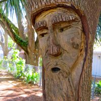Tree Spirits: The ZZ Top Collection