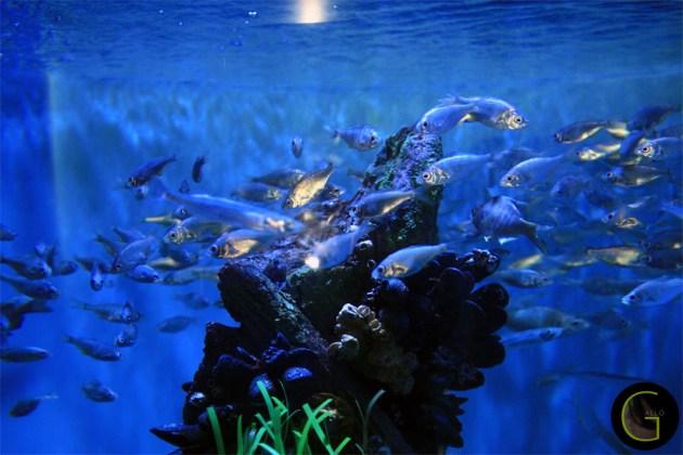 Fish-thousand-colors-3