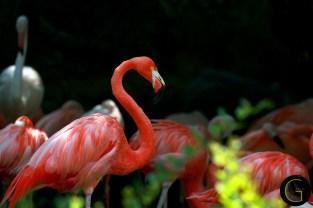 Flamingo-3