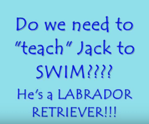Teaching a Labrador to Swim?