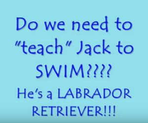Teaching a Labrador to Swim?