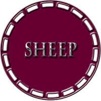 Sheep Showing
