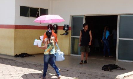 Animais de rua um problema de saúde publica que também afeta o Gama