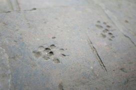 Katzenspuren im Stein