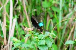 Schmetterling am Wolkenpass