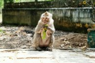 Affe genießt seine Banane