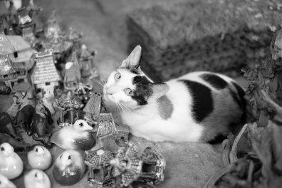 Katze als Aquarium Deko?