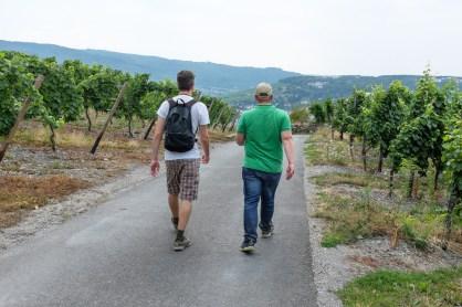 Durch die Weinberge