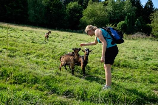 Simone und die Ziegen