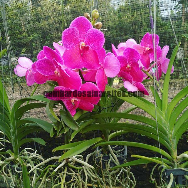 Jasa Pembuatan dan perawatan taman Bandung Jakarta Bunga hias 2