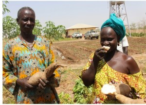 UN Food & Agriculture Organisation In The Gambia