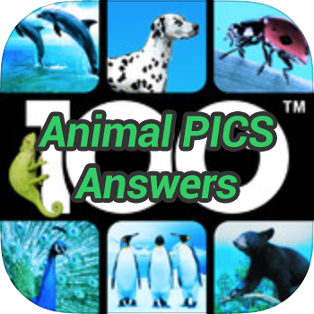 Animal Pics Answers