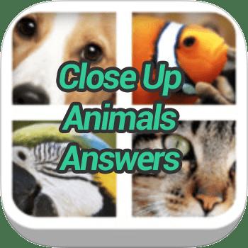 Close Up Animals Answers