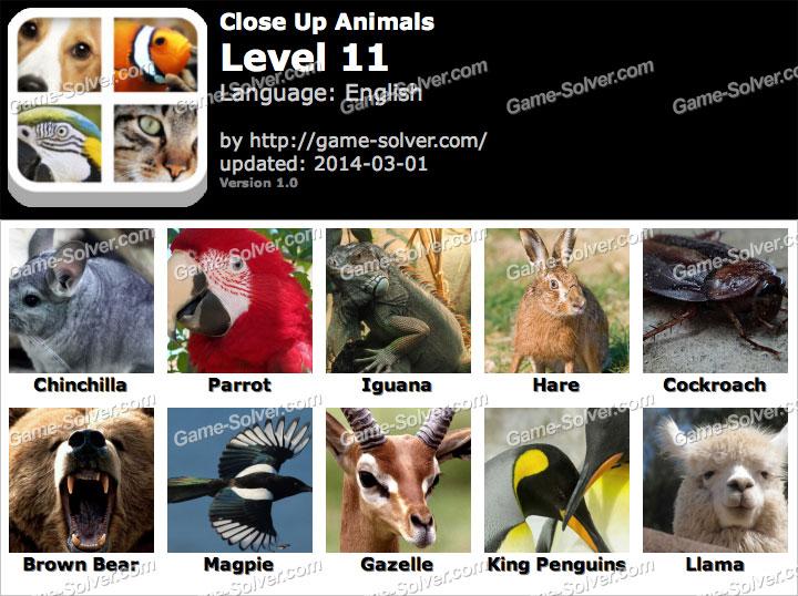 Close Up Animals Level 11
