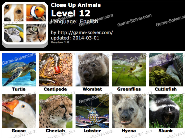 Close Up Animals Level 12