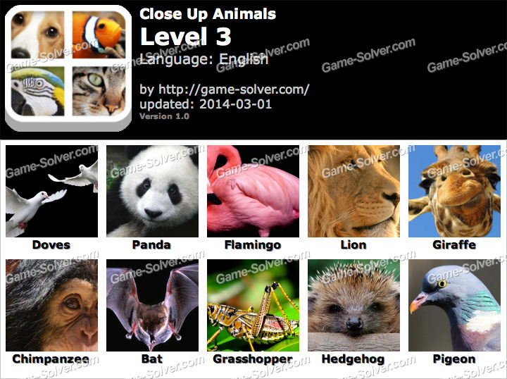 Close Up Animals Level 3