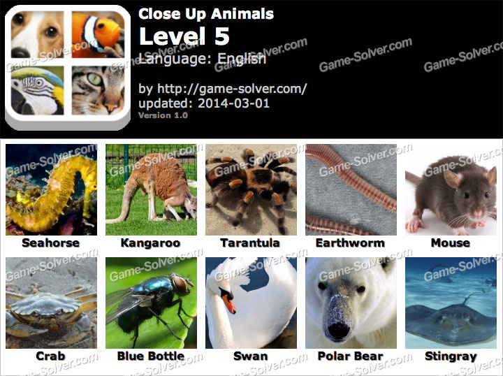 Close Up Animals Level 5