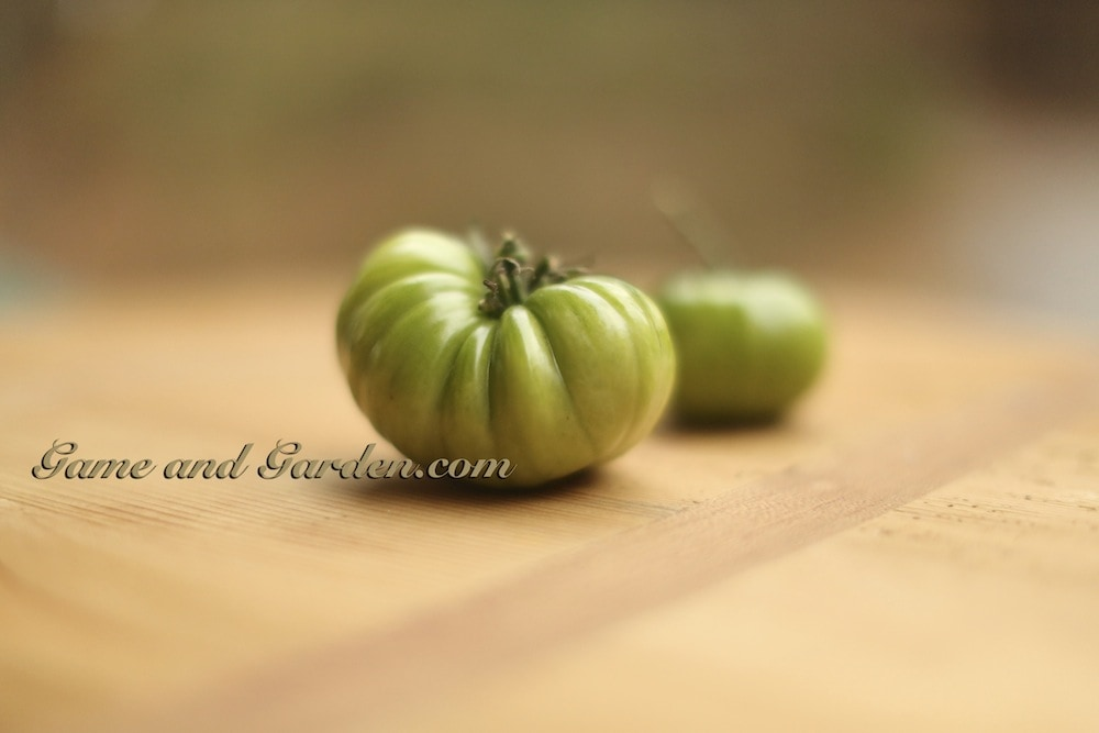 My Beautiful Green Tomatoes