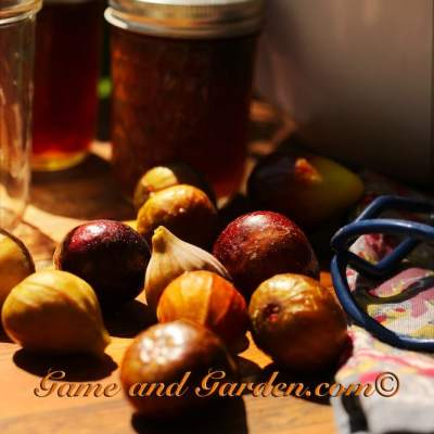 Preserving Fruits – Figs