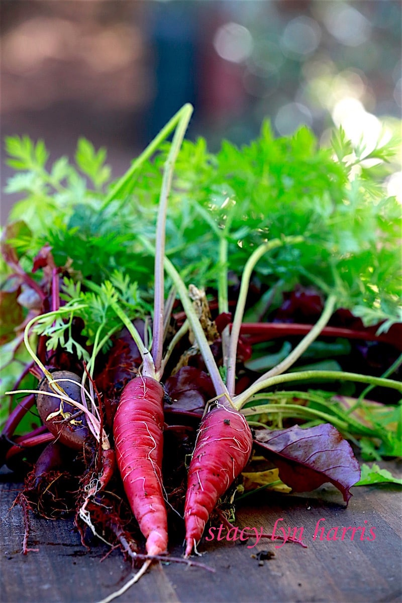 One of my favorite varieties of carrots to plant and cook are the Purple Dragon.