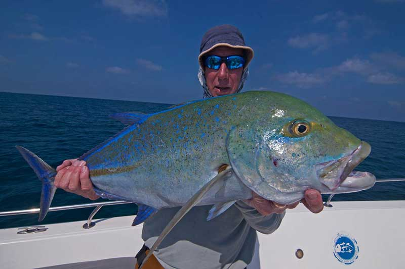 graham_bluefintrevally_popping_shimanostella_cuberalure