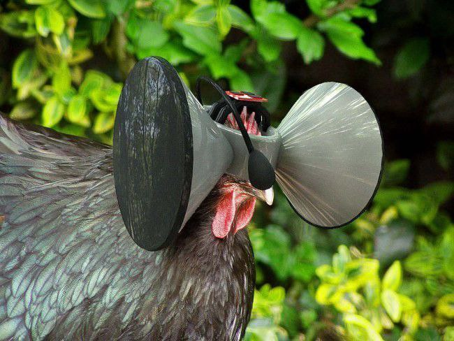 gallinas con cascos VR