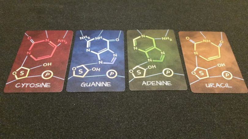 RNA cards - the building blocks of, well, you.