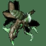 darkling-weevil