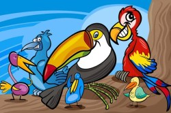 Exotic Bird Coloring