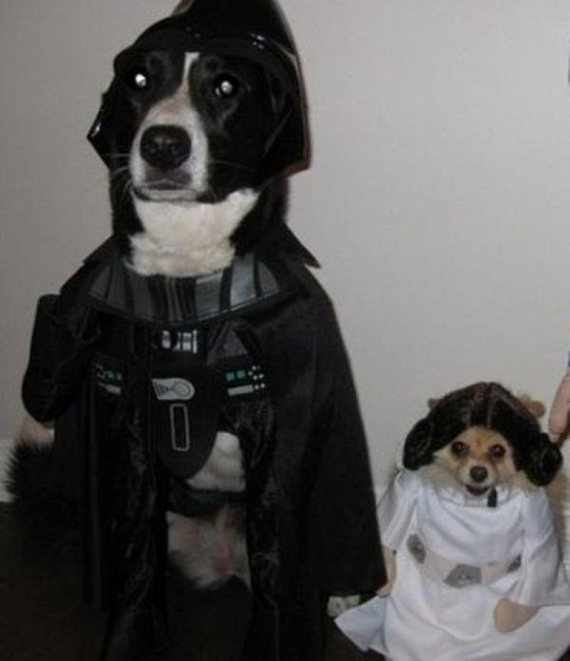 415a9abedaf78c58bd798828aca9125b-the-weekly-irl-miserable-pets-cosplaying-star-wars