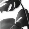 lámina_diseño_hojas