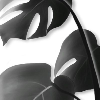 Lámina diseño hojas en blanco y negro