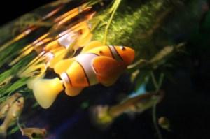 Im echten Aquarium. (Foto: GamingGadgets.de)