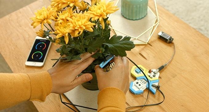 Pflanzen-Sensor selber bauen. (Foto: HoneyComb)