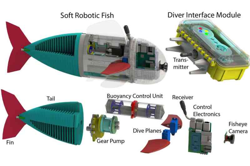 Der Aufbau des Fischs. (Foto: MIT)